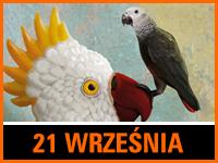 Zagubieni - Bilety: 10zł @ CKE Czerwionka-Leszczyny